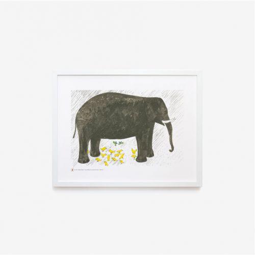 Zoo | Elefante