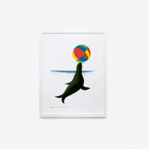 Zoo | Foca con palla