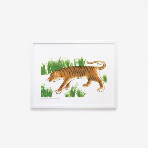 Zoo | Tigre